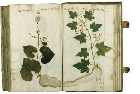 herbarium. Black Bedroom Furniture Sets. Home Design Ideas